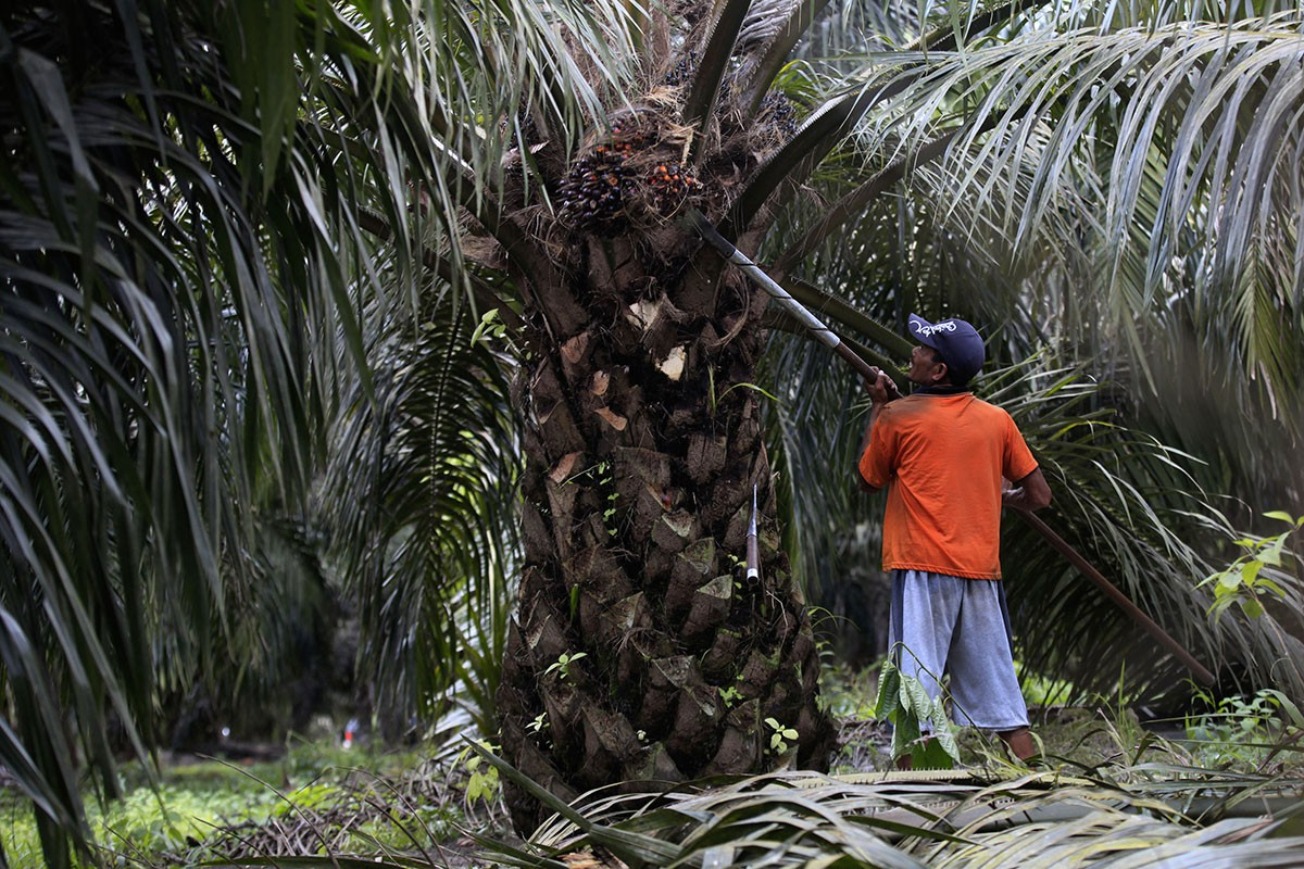 Relying on smallholders for future palm oil growth