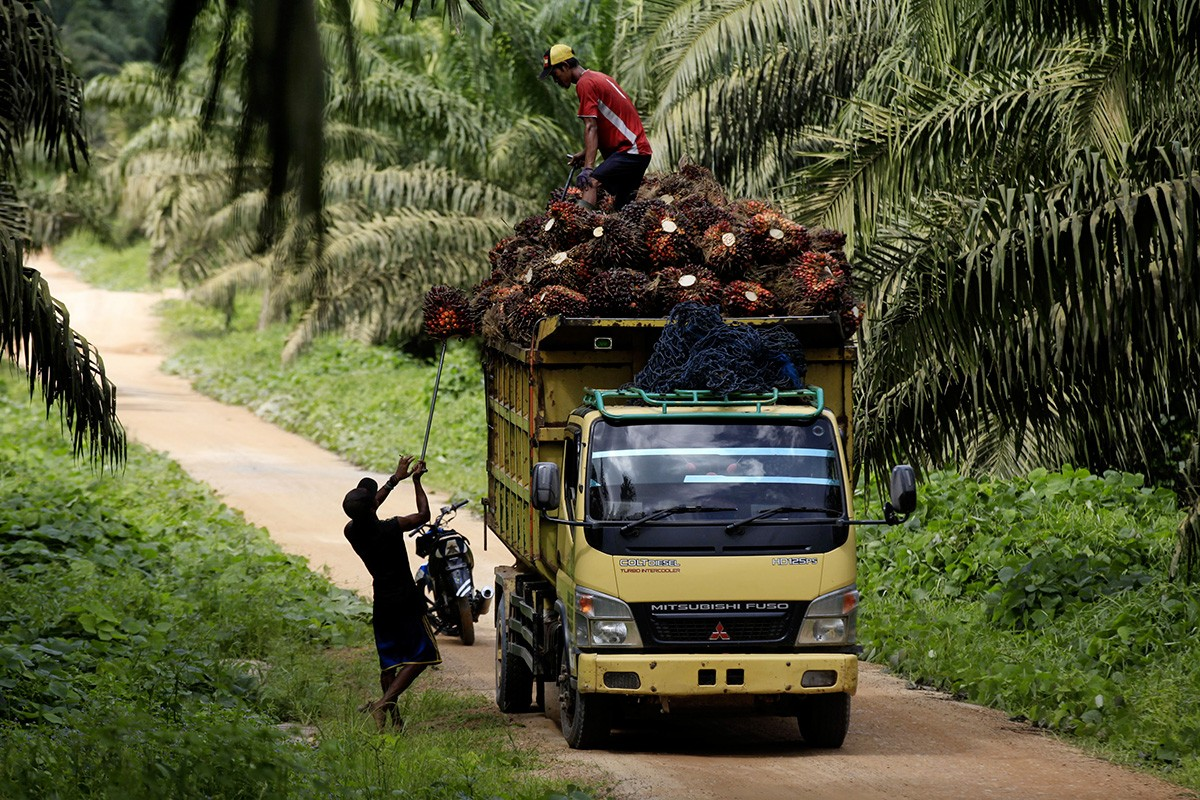 Indonesia enjoys big biodiesel surplus but loses export markets