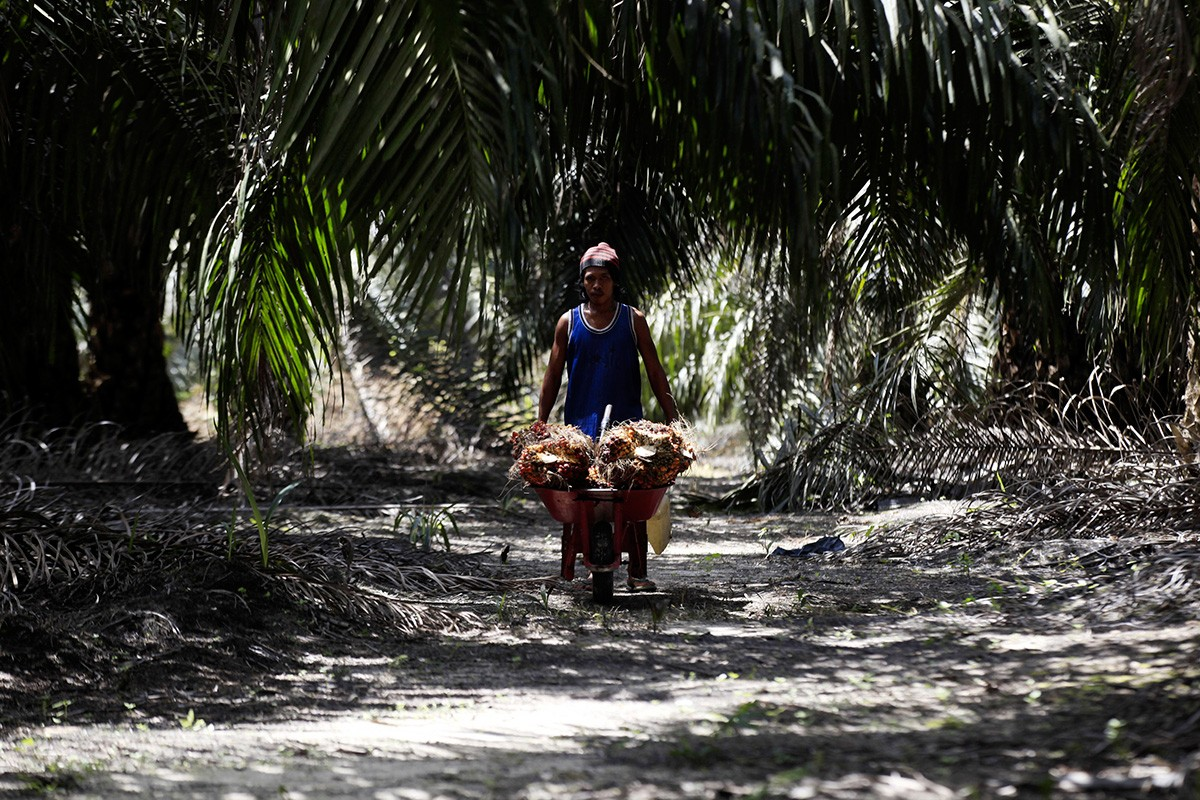Finding common ground in Indonesia-EU palm oil spat